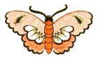 Applikation Patch Sticker Schmetterlinge Farbe: Lachs 8,5x5cm