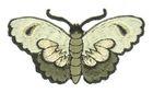 Applikation Patch Sticker Schmetterlinge Farbe: Olive 8,5x5cm