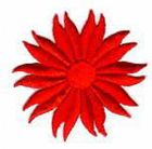 Margaritten-Applikationen Durchmesser 5cm AA106-01 rot