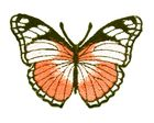Applikation Patch Schmetterling 7,3 x 5,5cm Farbe: Orange