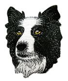 Applikation Patch Sticker Hund Border Collie 6 x 8cm