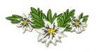 Landhaus Trachten Wiesn Applikation Edelweiss 7 x 3,8cm Farbe: Weiss
