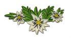Landhaus Trachten Wiesn Applikation Edelweiss 7 x 3,8cm Farbe: Beige