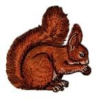 Applikationen Patch Eichhörnchen Eichkater 7,8 x 8cm Farbe: Rotbraun